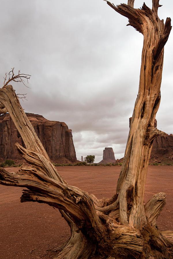 Deadwood Photograph - Monument Valley deadwood by Roy Nierdieck