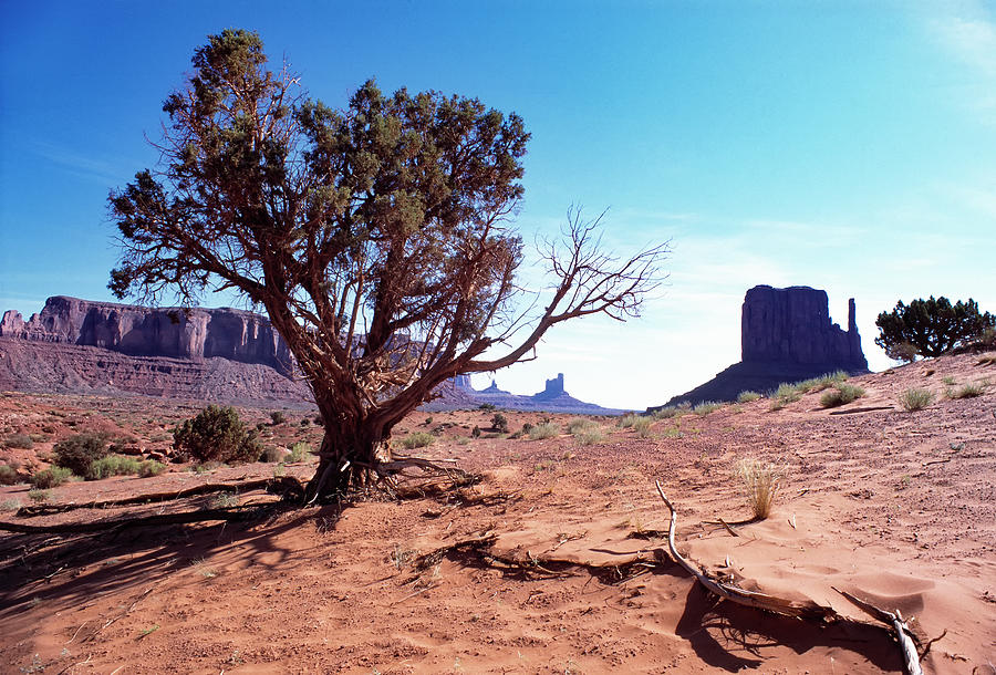 Monument Valley Photograph - Monument Valley Tree 1 by Kim Lessel