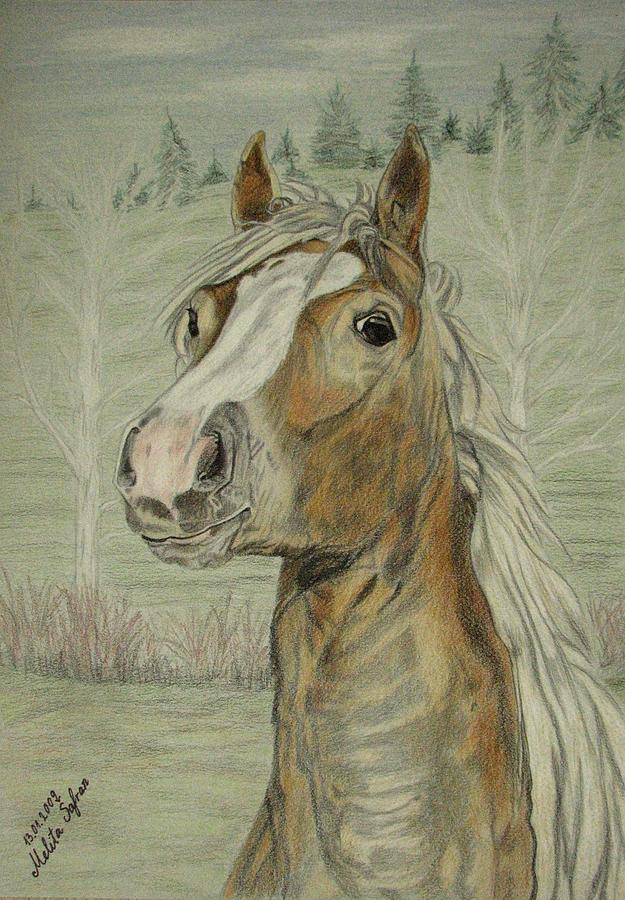 Horse Drawing - Mony by Melita Safran