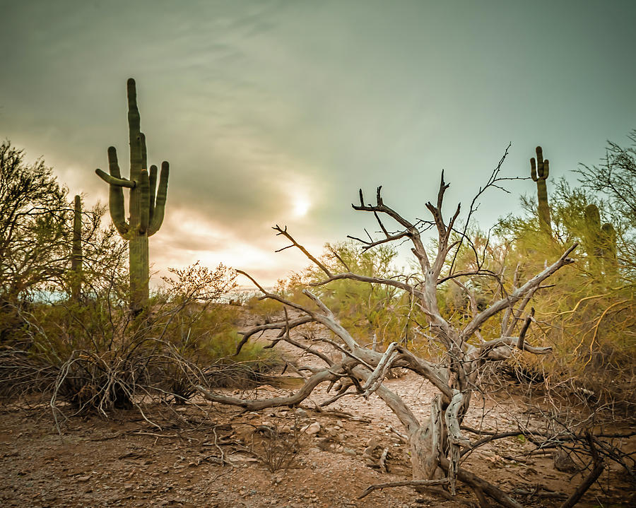Moody Desert by Ken Mickel