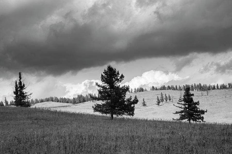 Moody meadow, Tsenkher, 2016 by Hitendra SINKAR