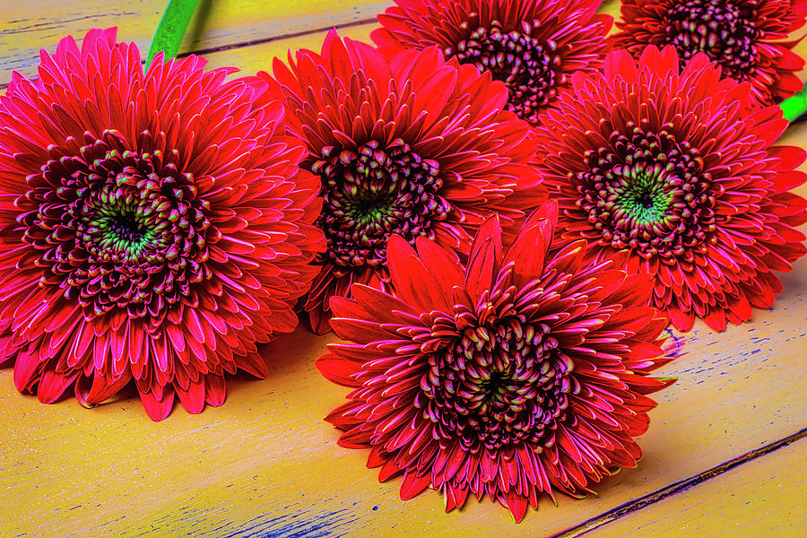 Mood Photograph - Moody Red Gerbera Dasies by Garry Gay