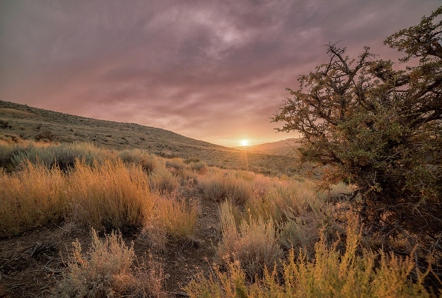 Moody Summer Sunset In The High Desert Of Nevada With Sagebrush And Tall Grass Photograph