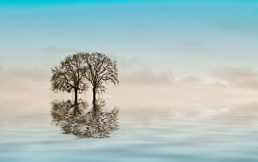 Trees Photograph - Moody Trees by Jean Noren