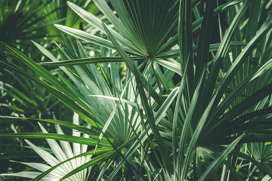 Moody Tropical Leaves Photograph By Andrea Anderegg Download 4,225 tropical leaves free vectors. moody tropical leaves by andrea anderegg