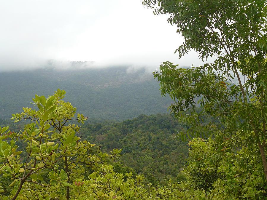 Wildlife Photograph - Mookambika Wildlife Sanctuary by Sandeep Gangadharan
