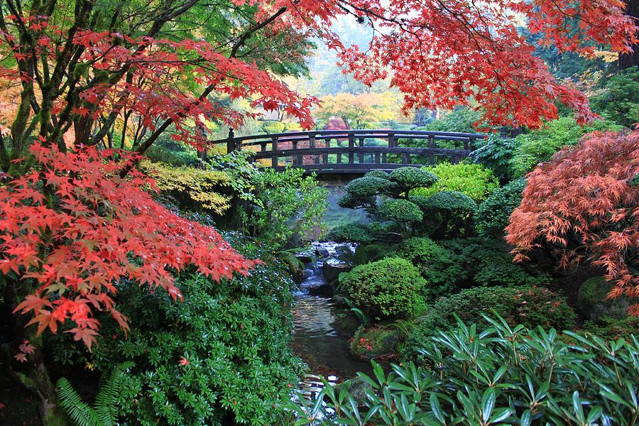 Moon Bridge Portland Japanese Garden Photograph By Douge Martin