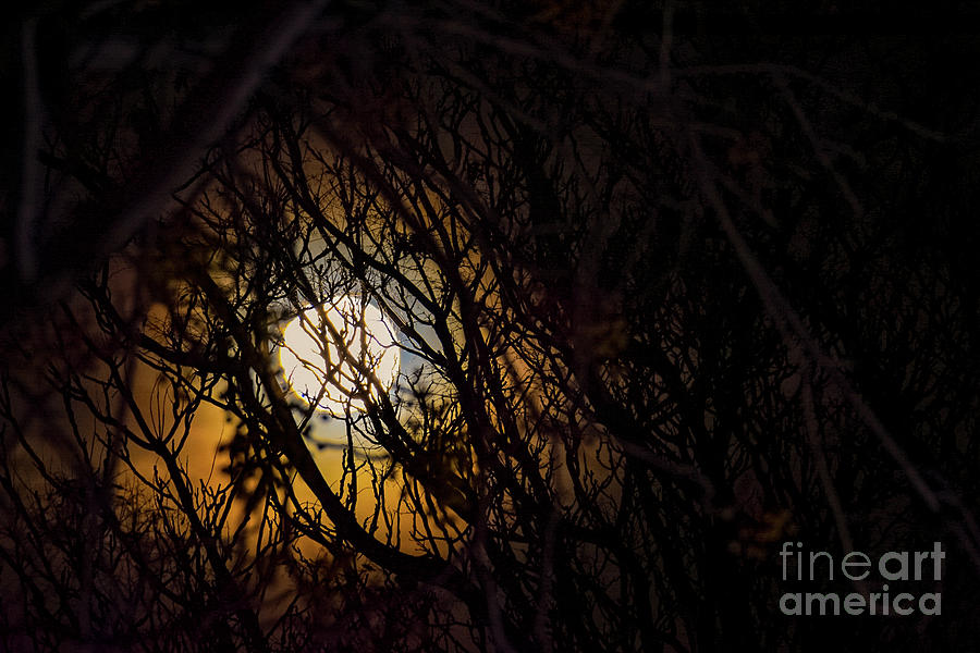 Moon Caught by Angela J Wright