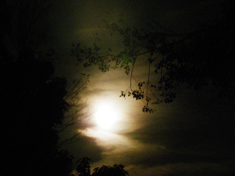 Nature Photograph - Moon Glow by Peggy King