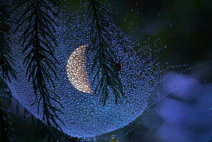 Moon Photograph - Moon In A Web by Molly Dean
