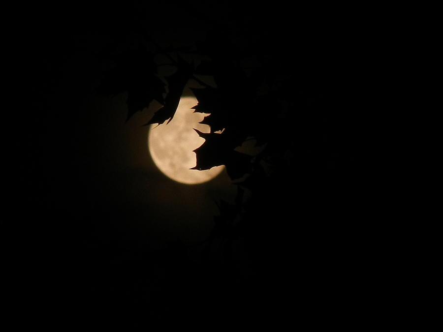 Moon Photograph - Moon In Shallow Depth Of Field by Srinivasan Venkatarajan