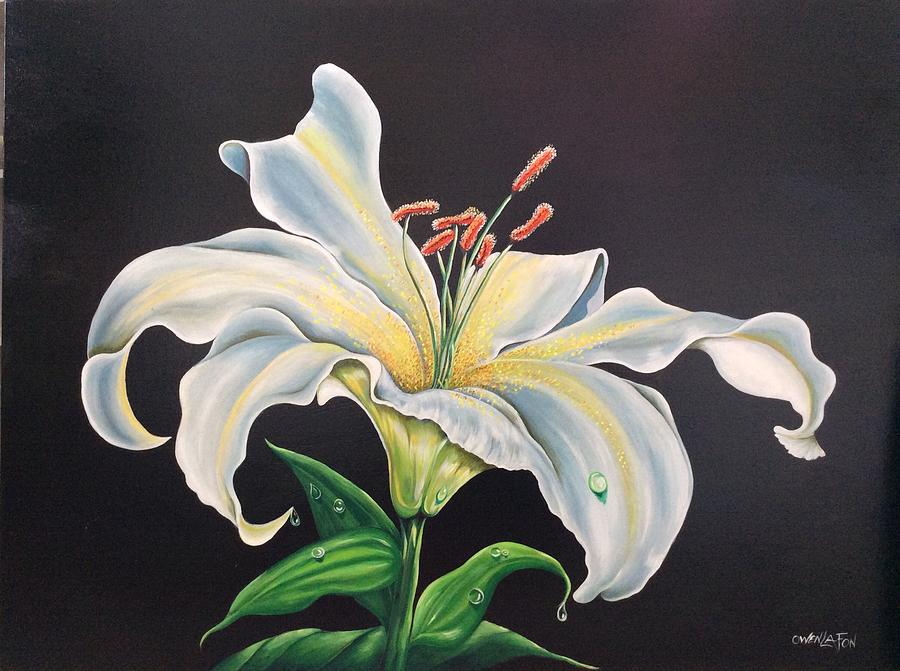 Moon light Lilly by Owen Lafon