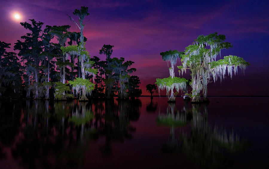 Moon over Maurepas swamp by Andy Crawford