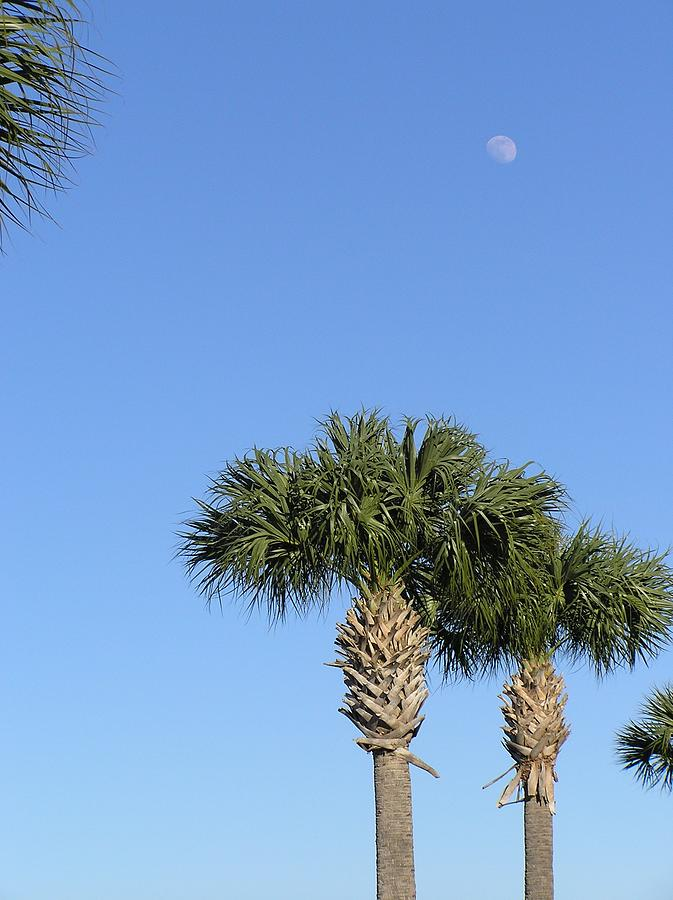 Moon Photograph - Moon Over Palms by Len Barber