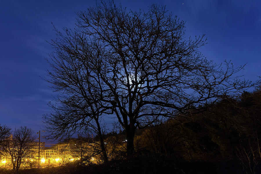 Oregon Photograph - Moon Rise Behind Tree Silhouette At Night by David Gn