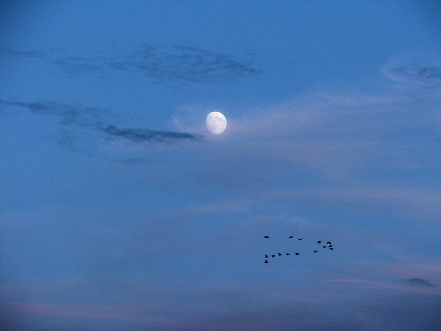Moon Rises Geese Fly by Lora Fisher