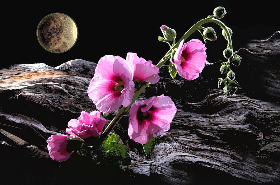 Flowers Photograph - Moon Scape by Manfred Lutzius