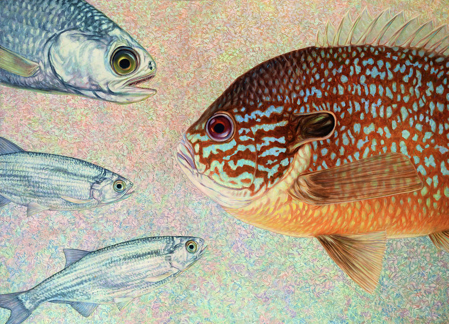 Fish Painting - Mooneyes, Sunfish by James W Johnson