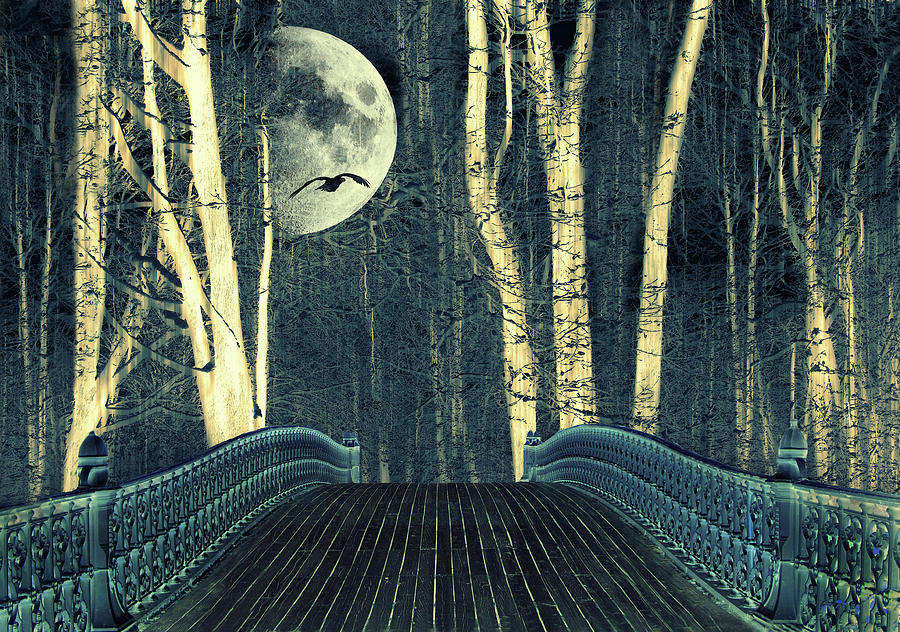 Bridge Photograph - Moonlight Birch by Jessica Jenney