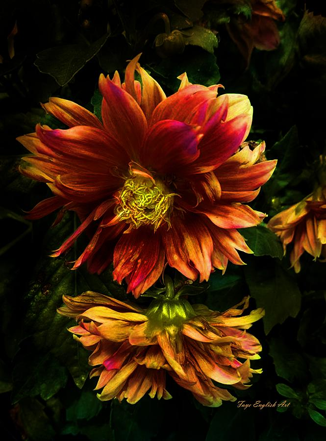 Flowers Digital Art - Moonlight Dahlia by Faye English