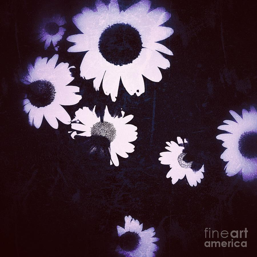 moonlight daisies by Jacqueline McReynolds