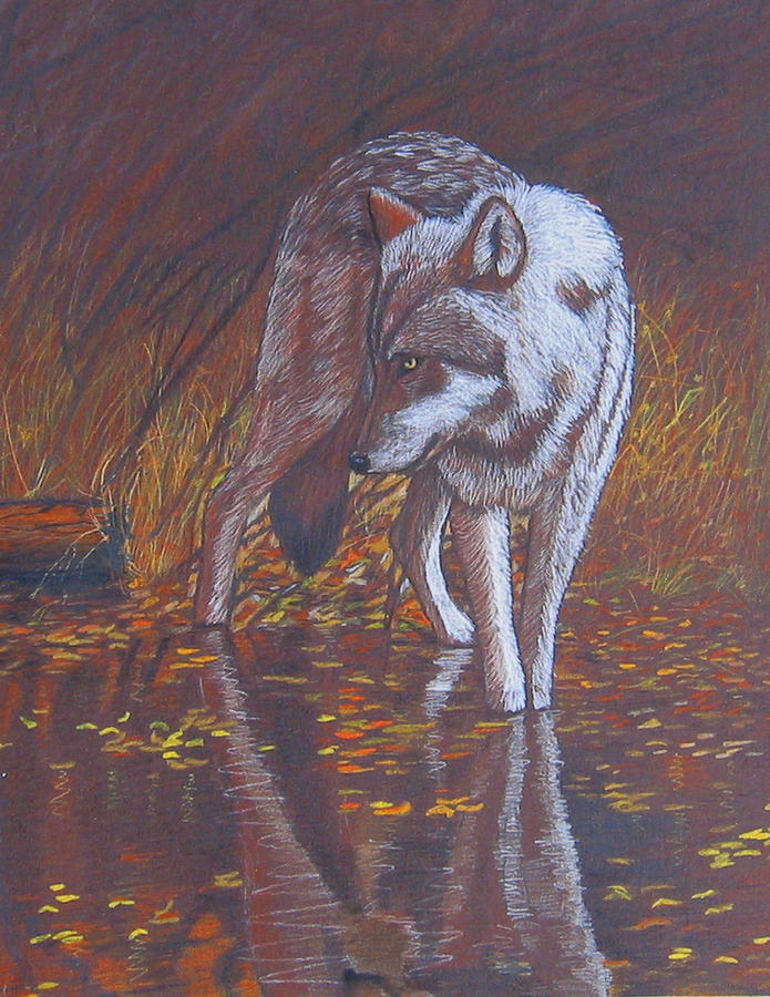Wolf Drawing - Moonlight Drink by Lorraine Foster