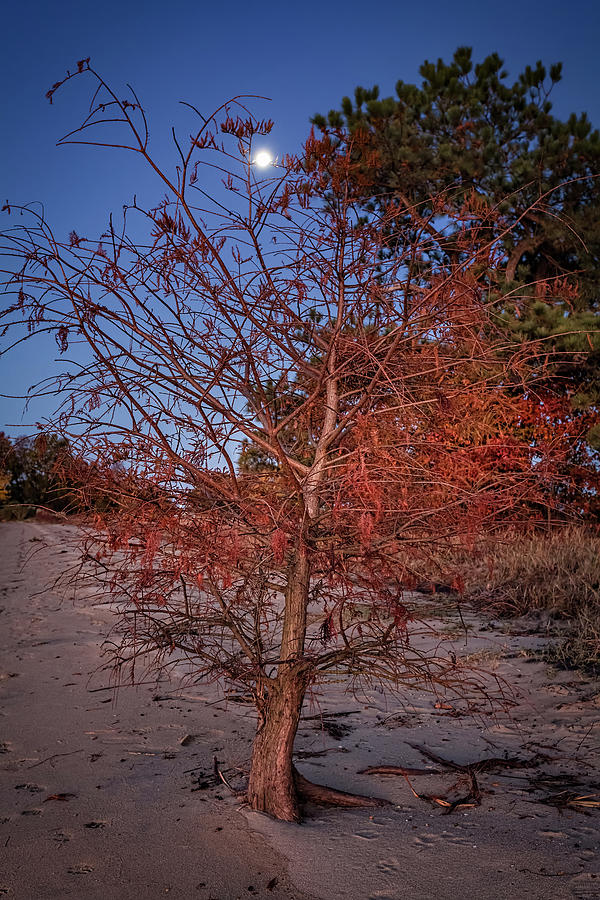Autumn Photograph - Moonlight by Lisa McStamp