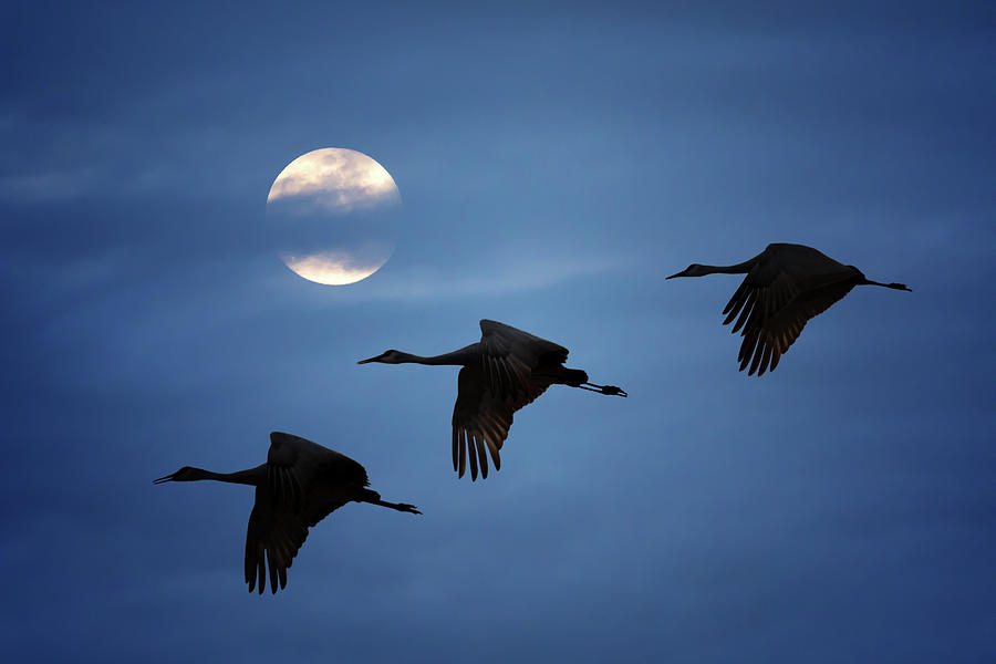 Moonlit Flight by Susan Rissi Tregoning
