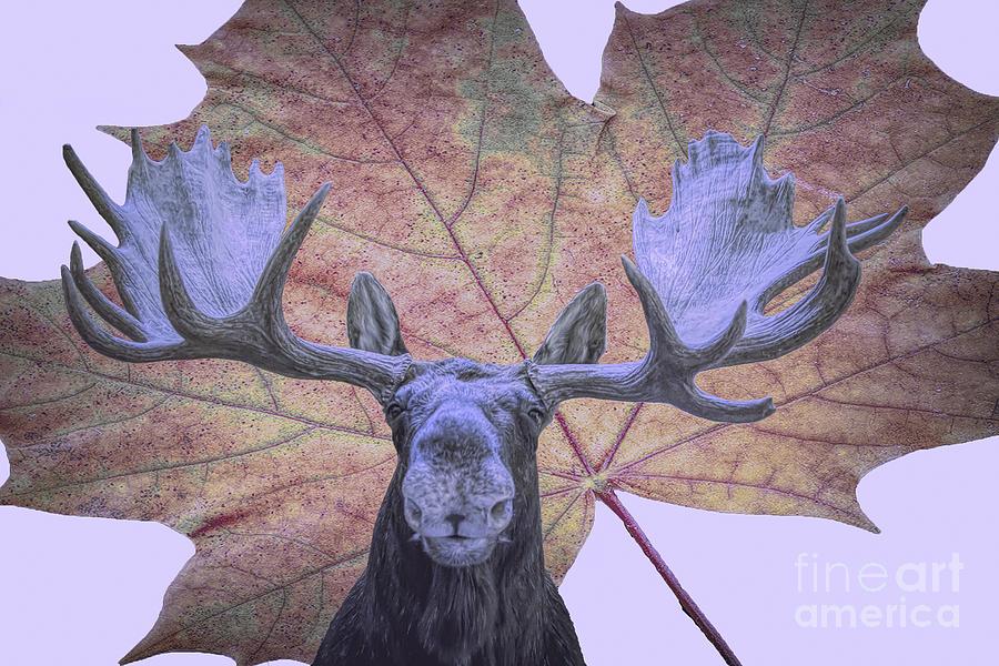Moonlit Moose by Ray Shiu
