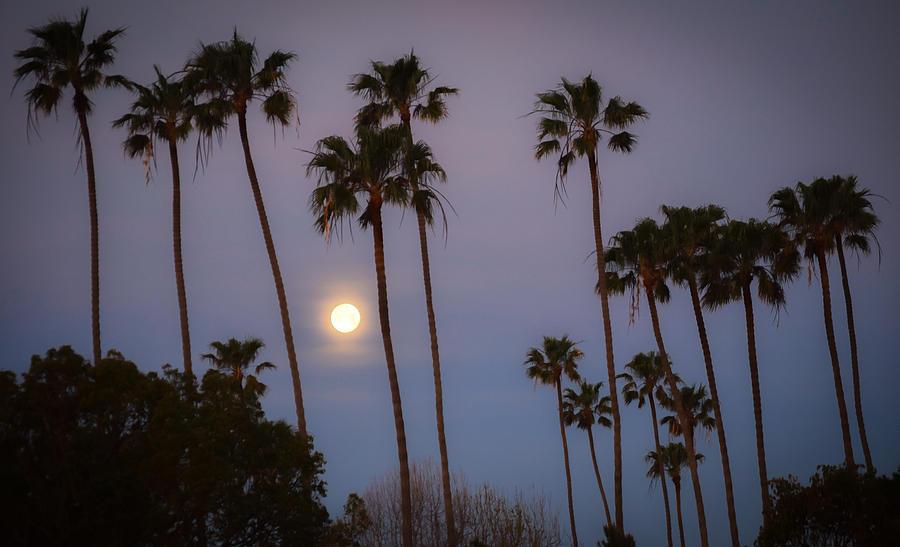 Moonset Palms by Richard Cheski