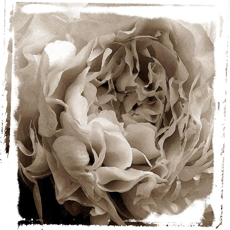Floral Photograph - Moonstone II by David Watkins Jr