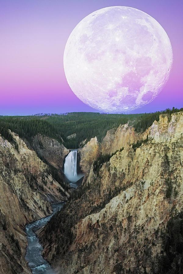 My Purple Dream Photograph By Edgars Erglis