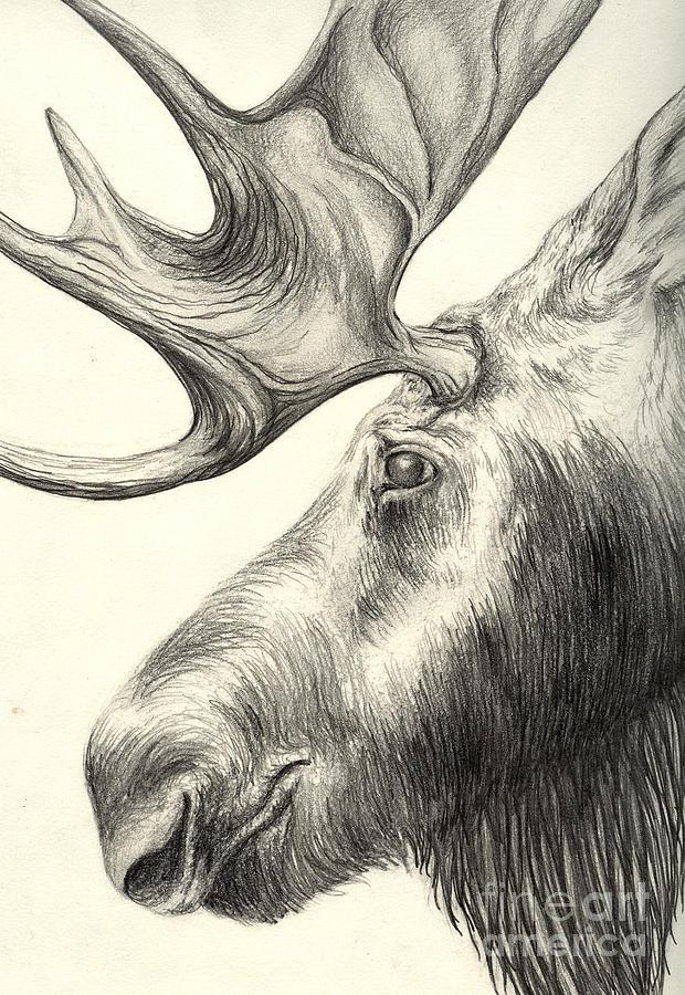 Moose Drawing by Aurora Jenson