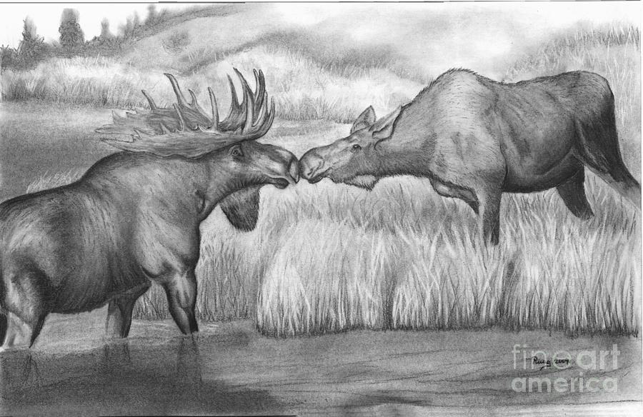 Wildlife Drawing - Moose Looking For Love by Russ  Smith
