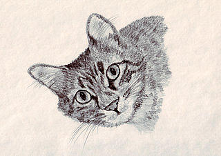Mopsy Drawing by Connie Morrison