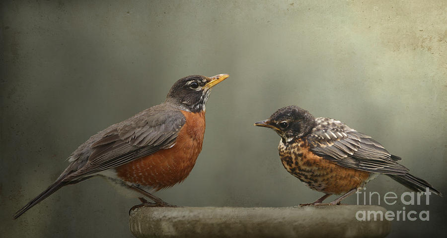 Birds Photograph - More Lessons In The Garden by Jan Piller