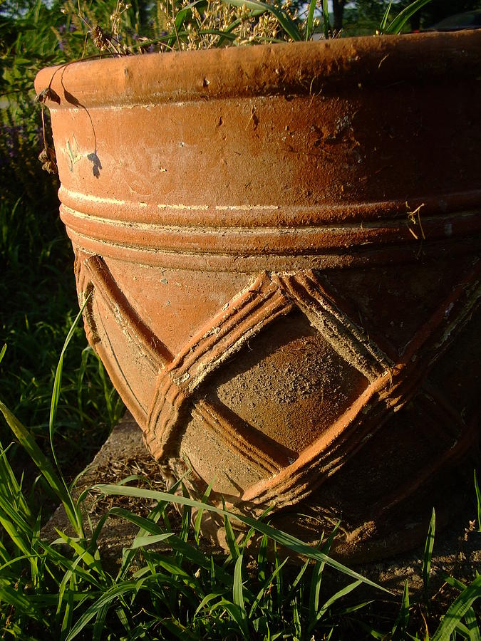 Flower Photograph - More Than A Planter by Ali Dover