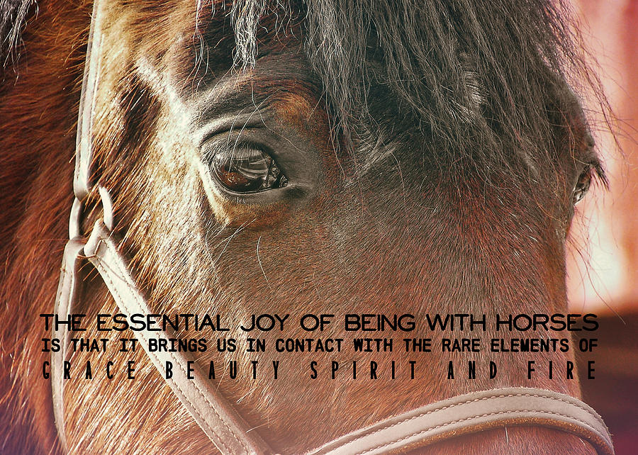 Horse Photograph - Morgan Horse Quote by JAMART Photography