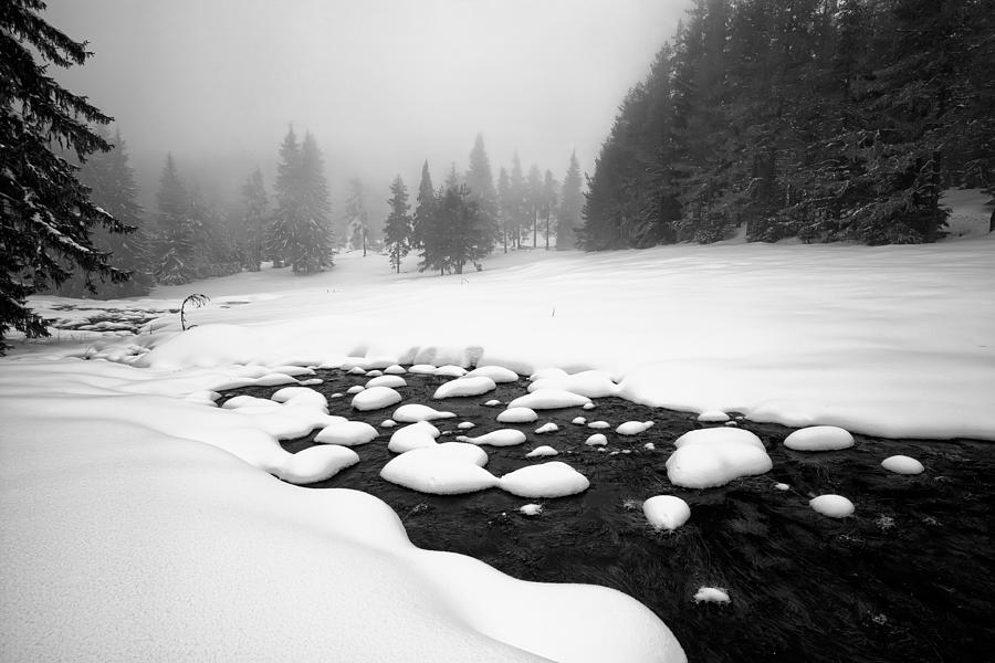 Winter Photograph - Morn In White by Evgeni Dinev