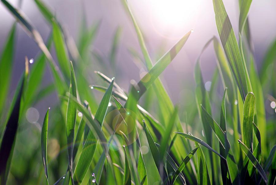 Grass Mixed Media - Mornin Grass by Steavon Horne