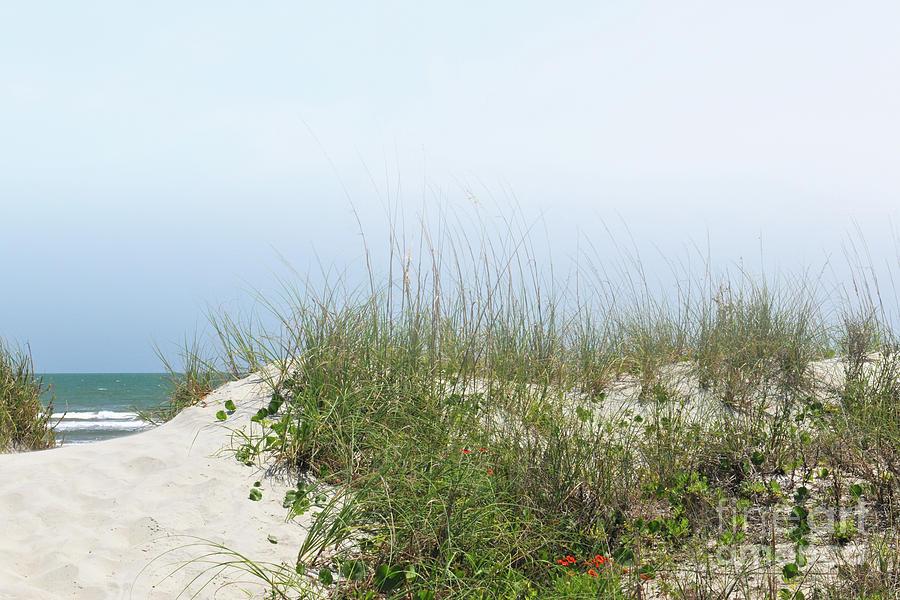 Morning Beach Fog Photograph