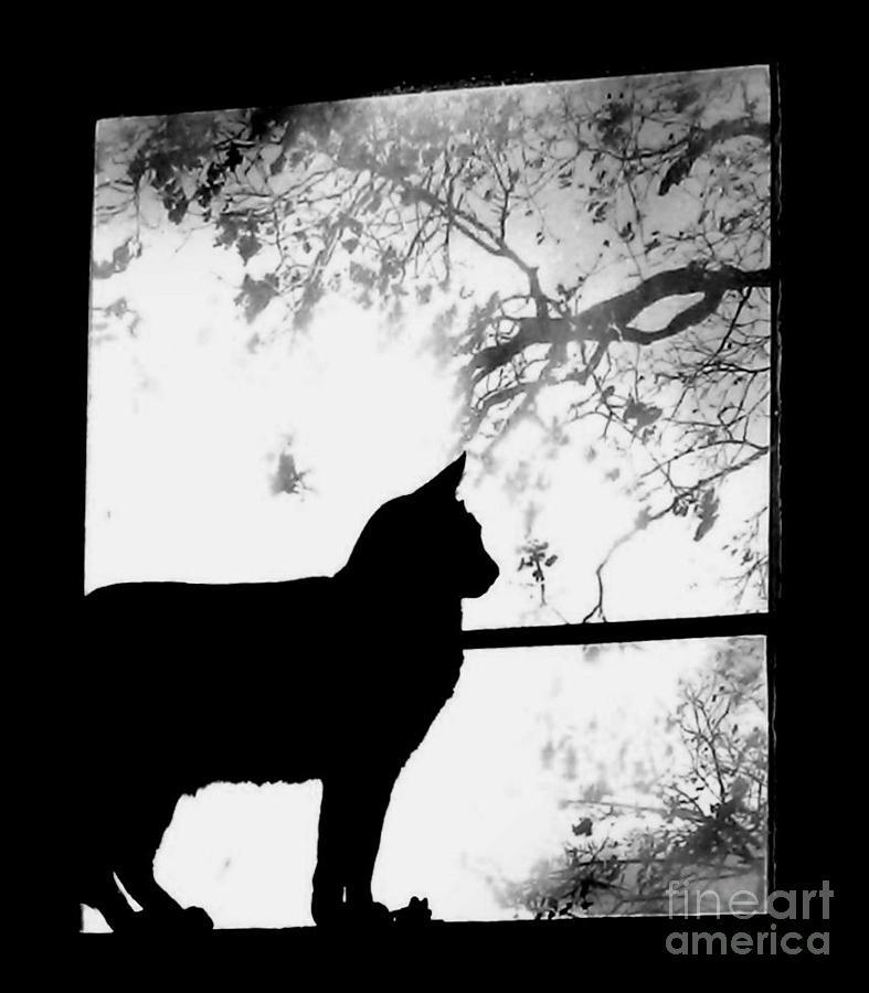 Cat Photograph - Morning Birdwatcher by Tina Ann Byers