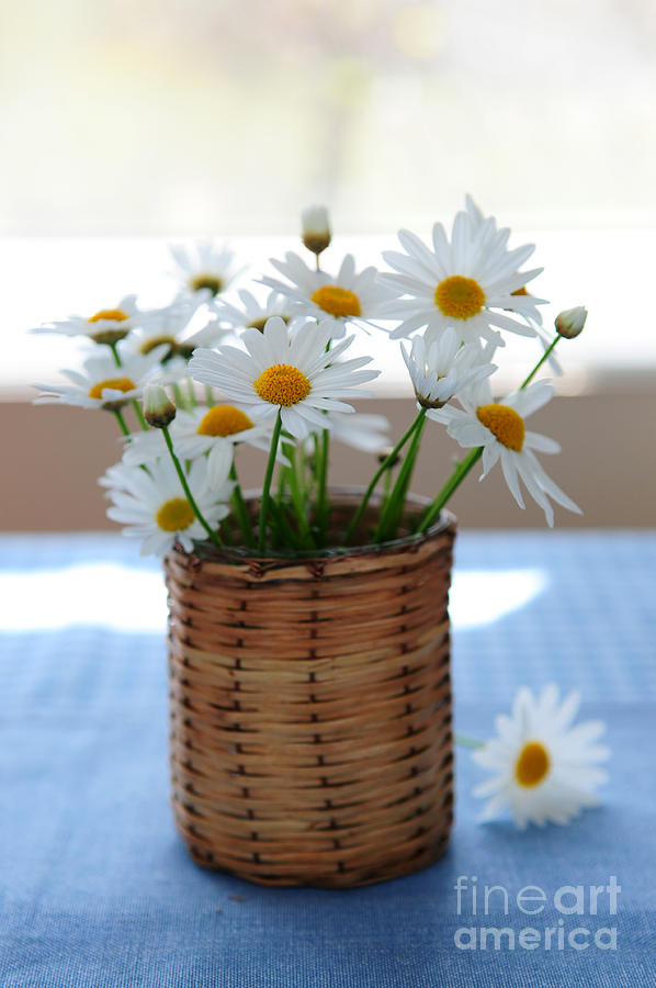 Morning Daisies Photograph
