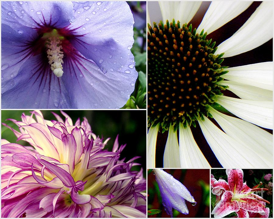 Collage Photograph - Morning Delight by Priscilla Richardson