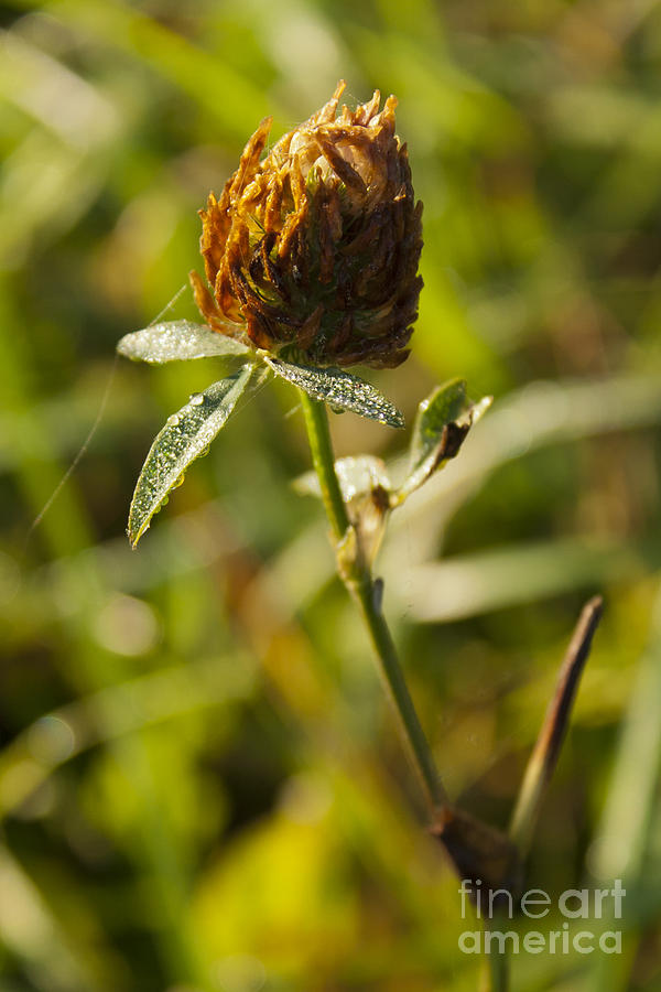 Morning Dew Photograph - Morning Dew 2 by Steffen Krahl