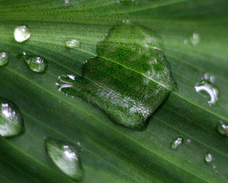 Water Drops Photograph - Morning Dew by Brendon Bradley