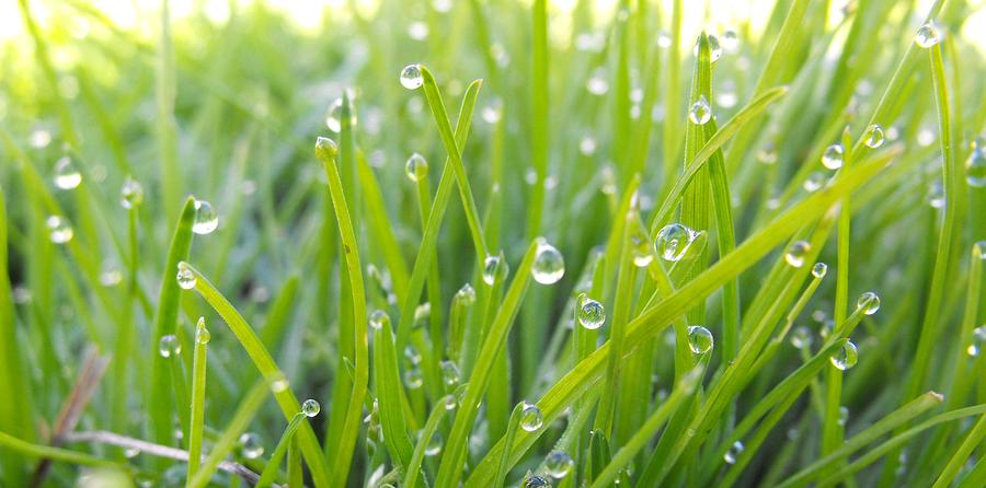 Micro Photography Photograph - Morning Dew by David Harvey