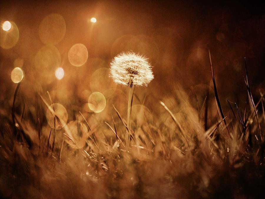 Field Photograph - Morning Dew by Scott Fracasso