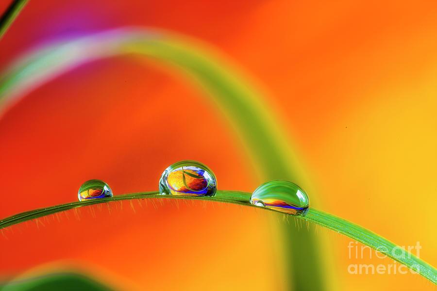 Abstract Photograph - Morning Dewdrops by Veikko Suikkanen