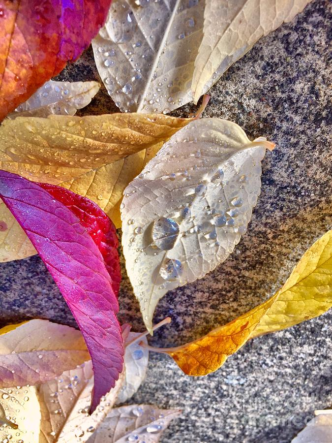 Leaves Photograph - Morning Due by Sue M Marshall